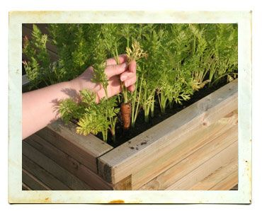 4X8 Raised Garden Bed Layout Ideas With Images 400 x 300