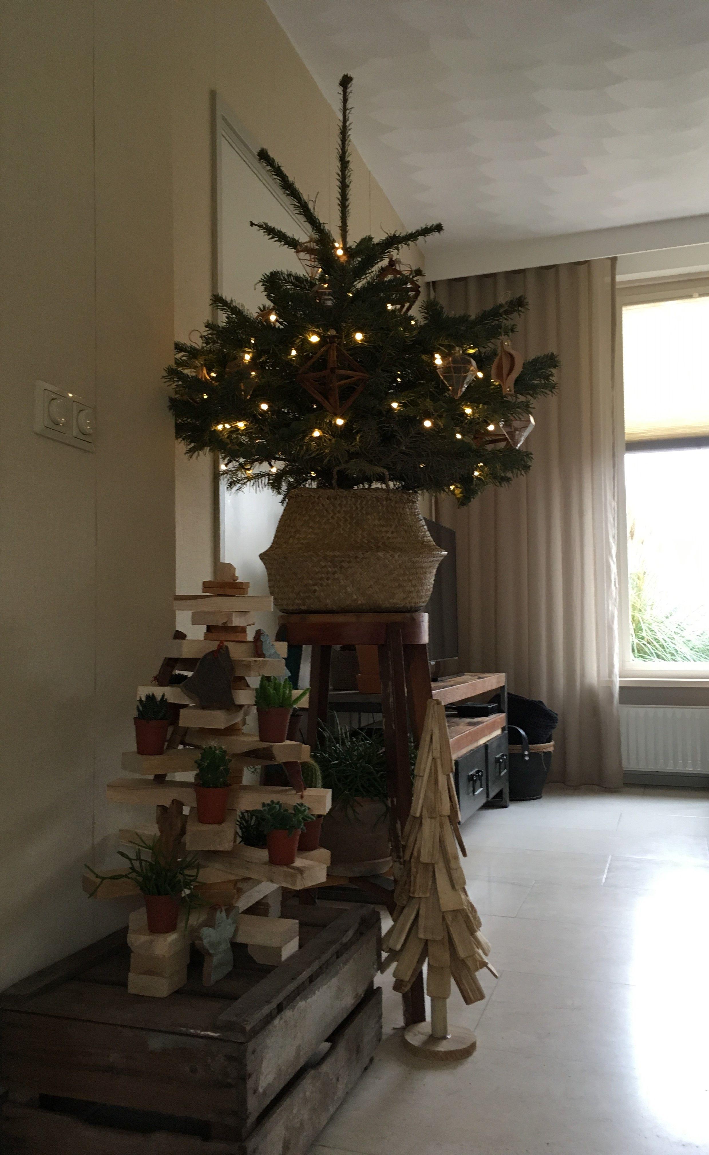 Kleine Nordmann Kerstboom In Ikea Mand Op Hoge Kruk