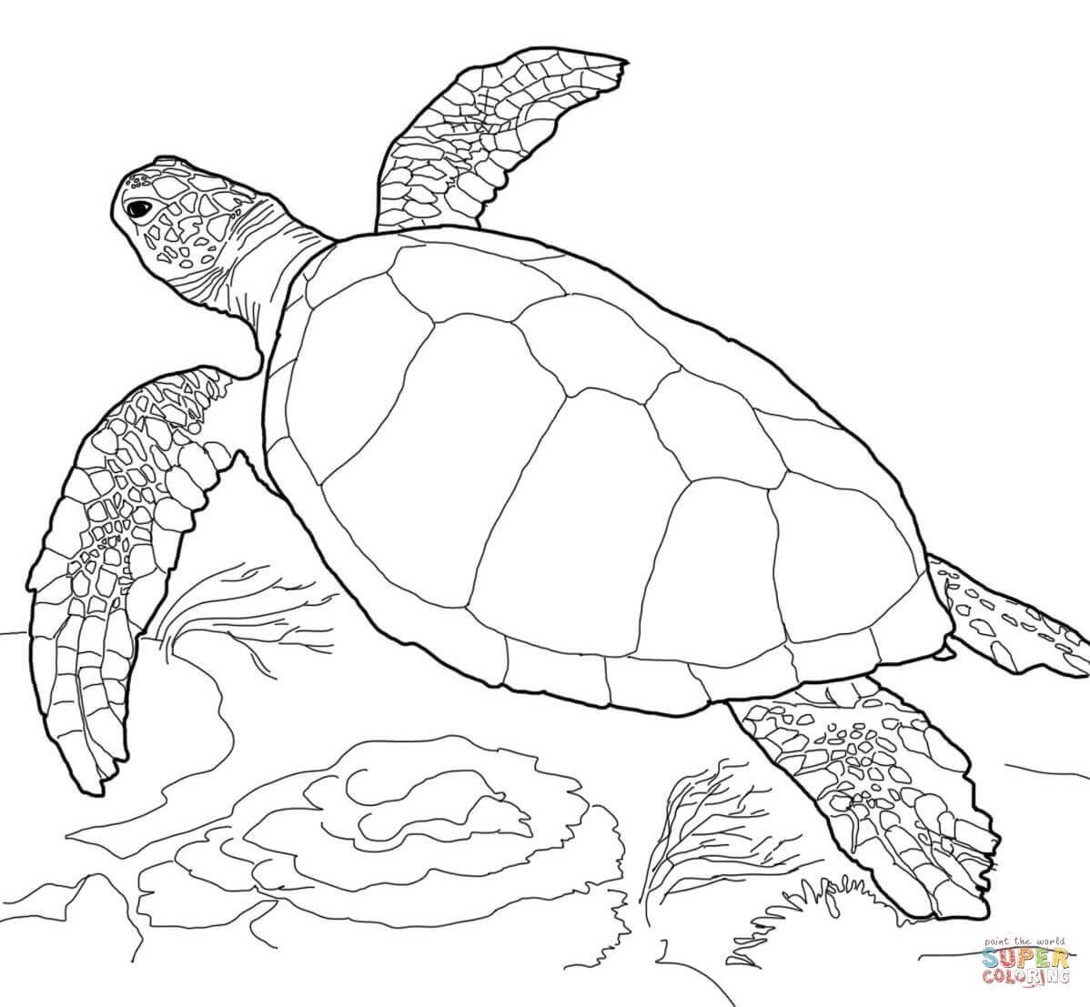 Sea Turtle Coloring Pages Beautiful Sea Turtle Coloring Page All Turtle Coloring Pages Turtle Drawing Animal Coloring Pages