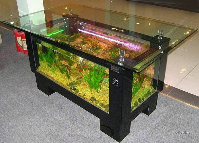 Outstanding aquarium coffee table aquatic turtle set up for Cheap small fish tanks