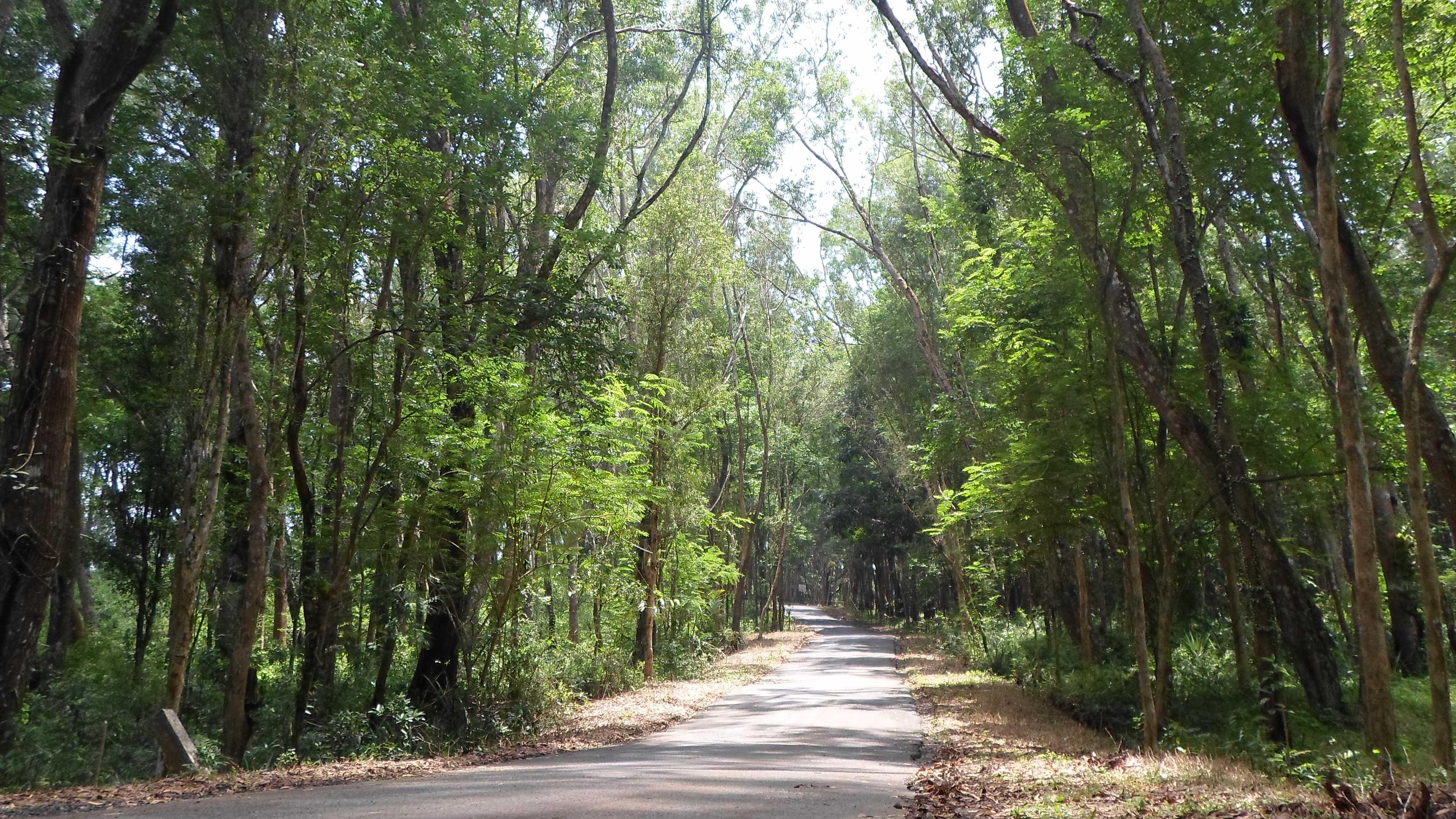 Path Of Pinus Forest, Mangunan Imogiri