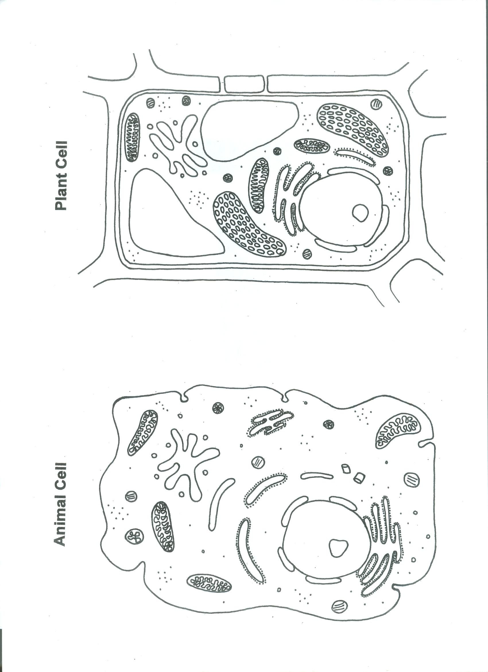 Worksheets Animal And Plant Cells Worksheet printable plant and animal cell shrinky dinks page 3 actual cells