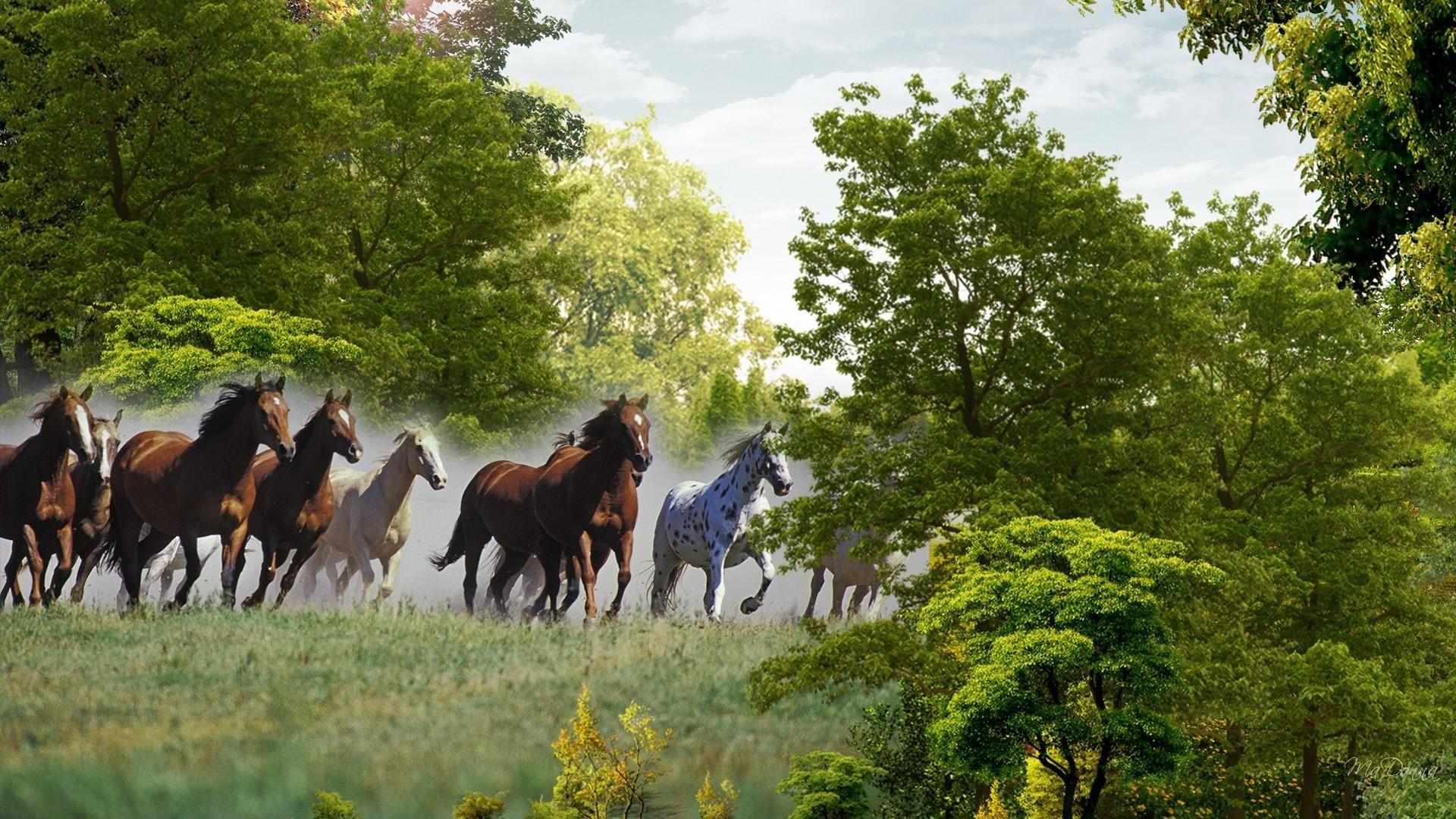 Running Horse Wallpaper High Resolution