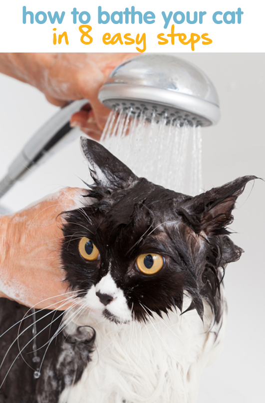 How To Bathe A Cat In 8 Easy Steps Cat Care What Cats Can Eat Cats