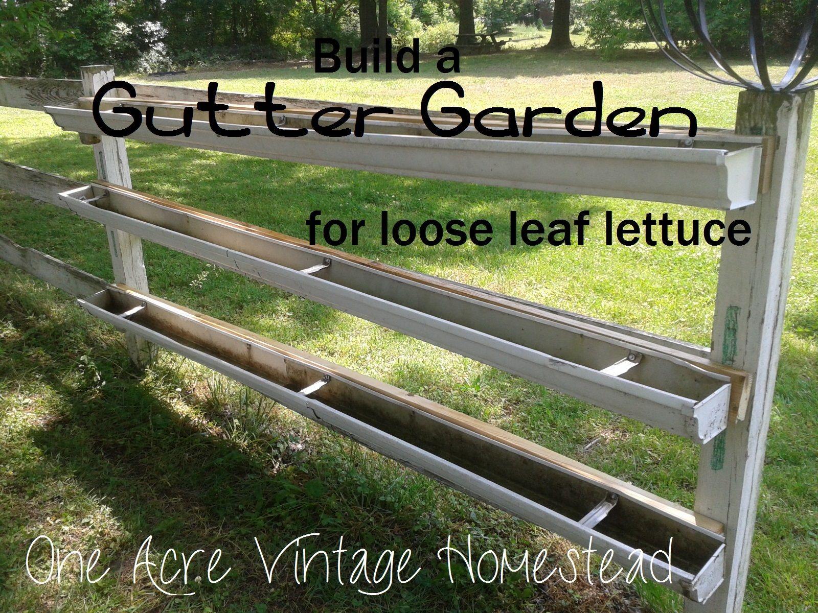 Building A Lettuce Gutter Garden One Acre Vintage Homestead How To Gutter Garden Vege Garden Ideas Garden