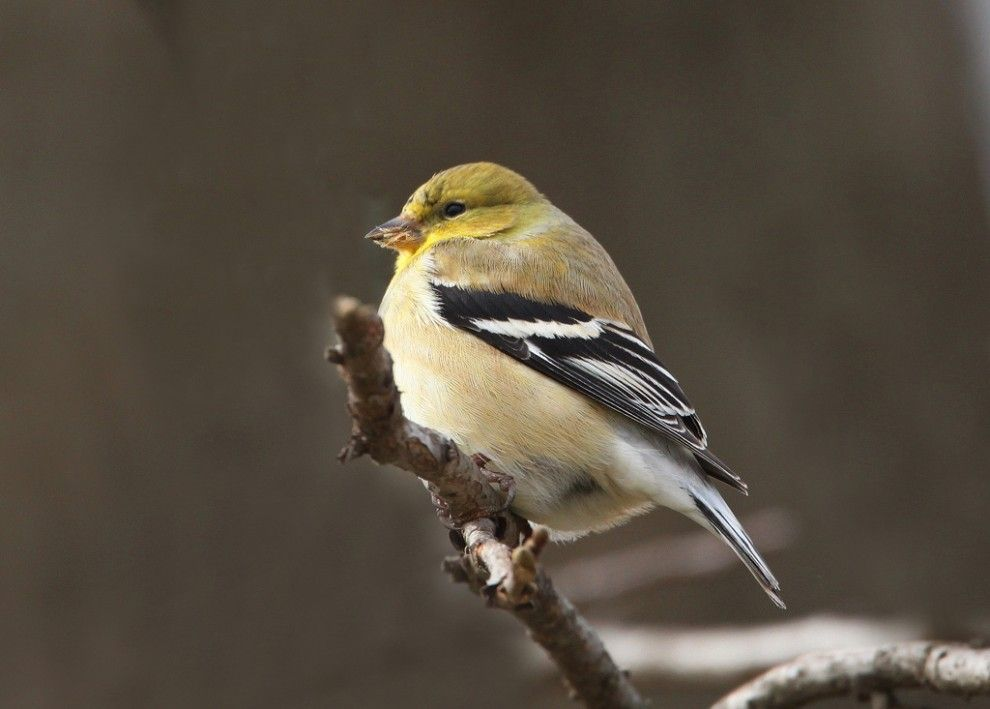25 photos to get you pumped for the Great Backyard Bird