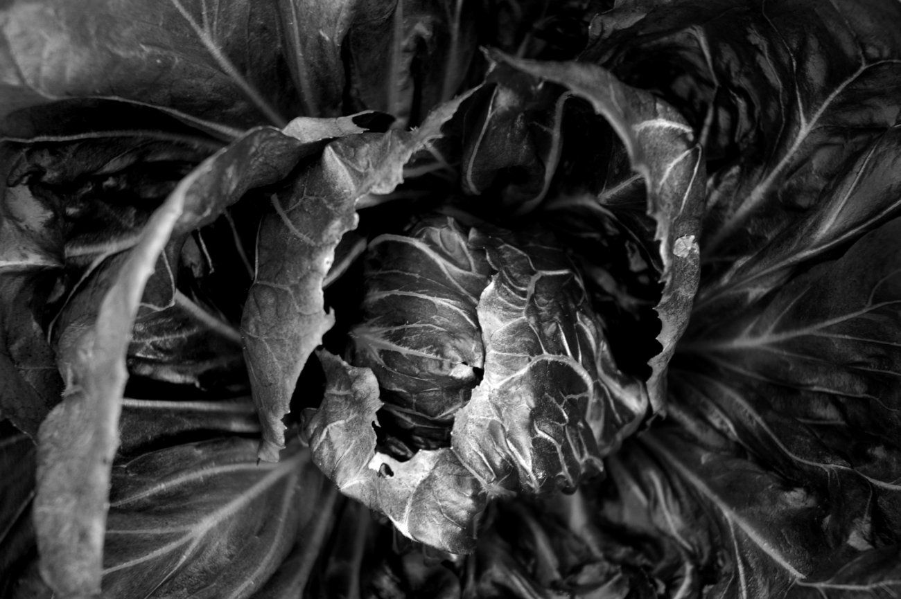 Image result for fruit and vegetable art photography veggie photos