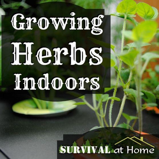 Best 25+ Indoor Herbs Ideas On Pinterest