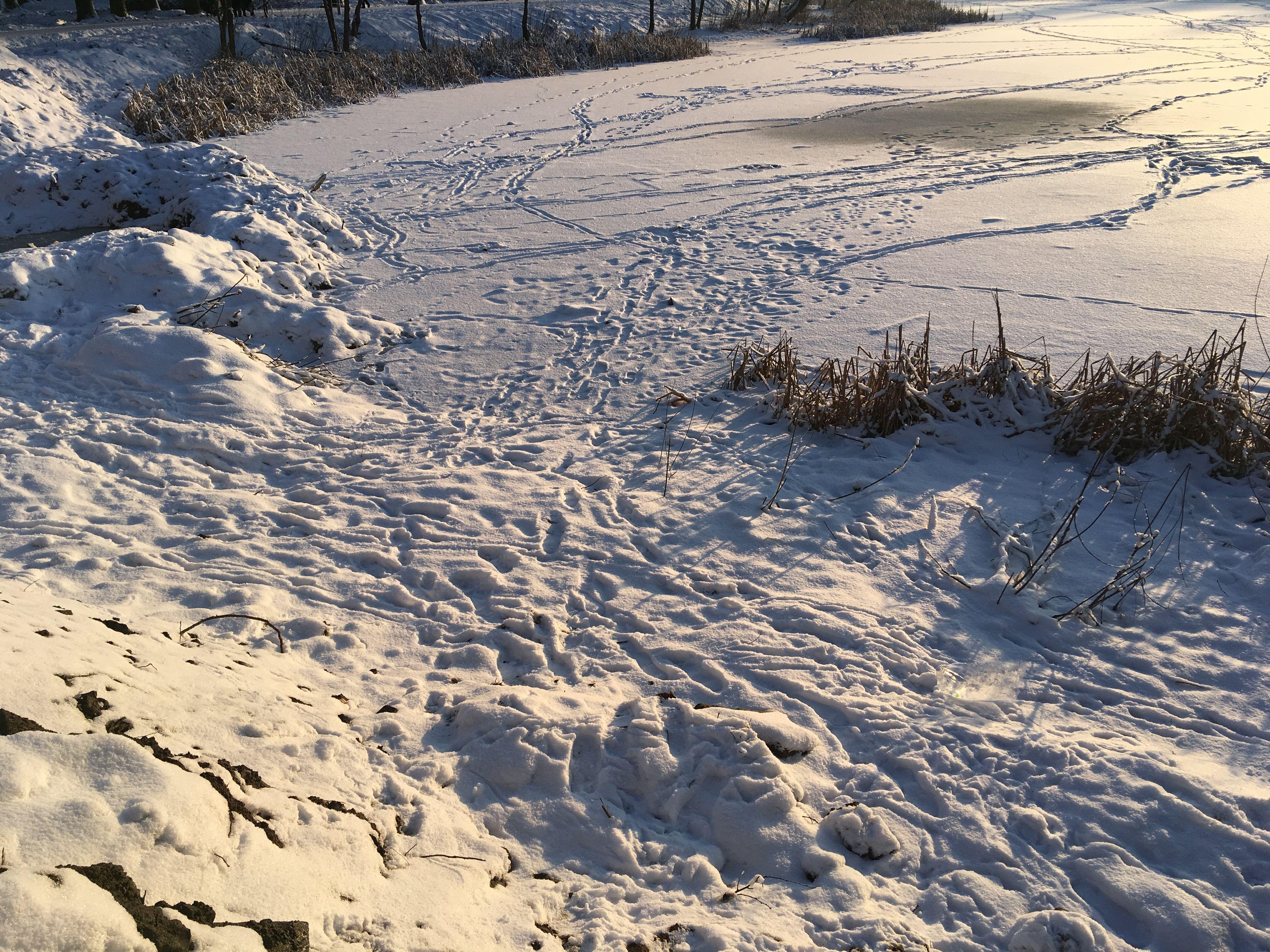 Участок, на котором была разбросана арматура на льду