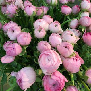 Umut Işığı: Anneler Günü #blog #blogger #blogyazılarım #UmutIşığı #AnnelerGünü #SibelBaba #SibelOnayBaba