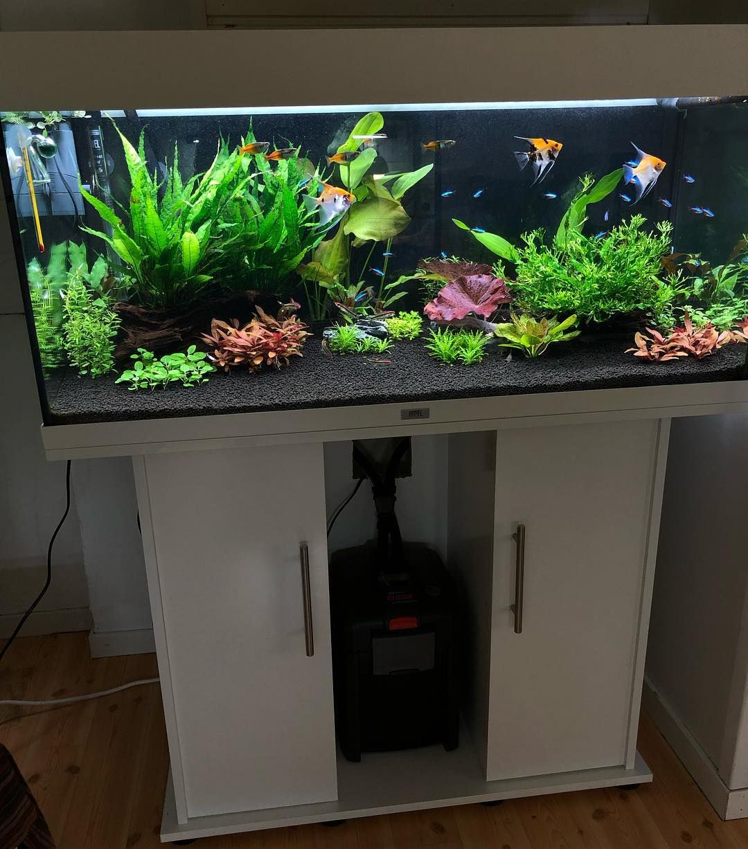 Beautiful Large Aquascape Tank Nature Style Design To Place In Living Room Fresh Water Fish Tank Fish Aquarium Decorations Fish Tank Design