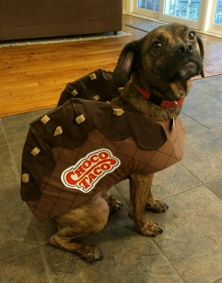 Choco Taco Dog Costume Dog Costume Dogs Choco Taco