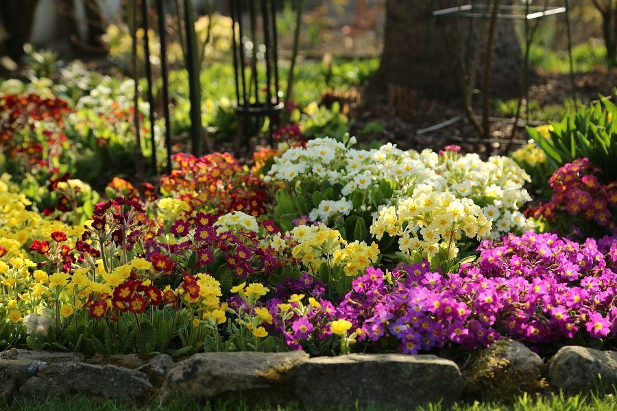 Roslin Menazeria Plants