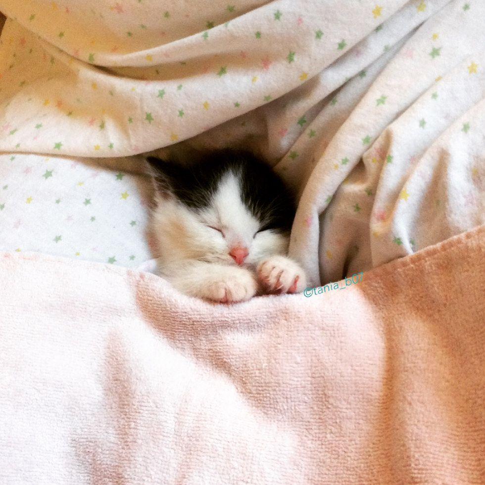 Pin By Erp Visions On Kitties Kitten Rescue Cat Cuddle Kitten