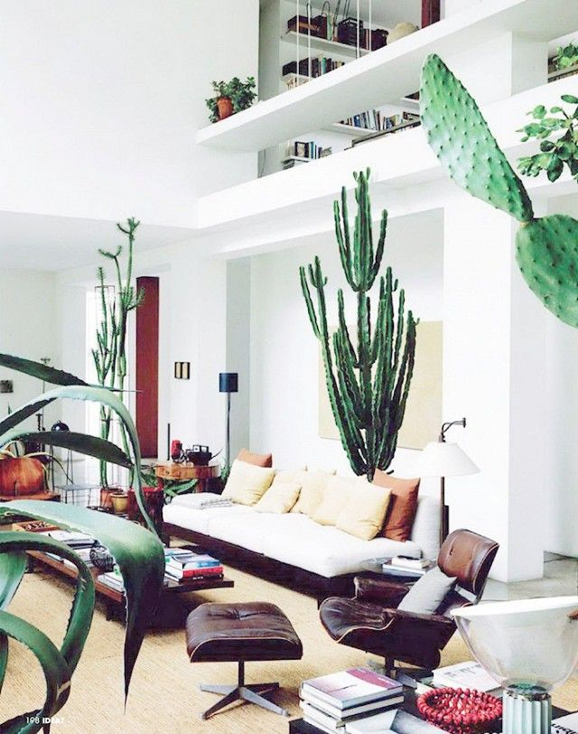 How to decorate with large indoor plants in every home Large living room plants