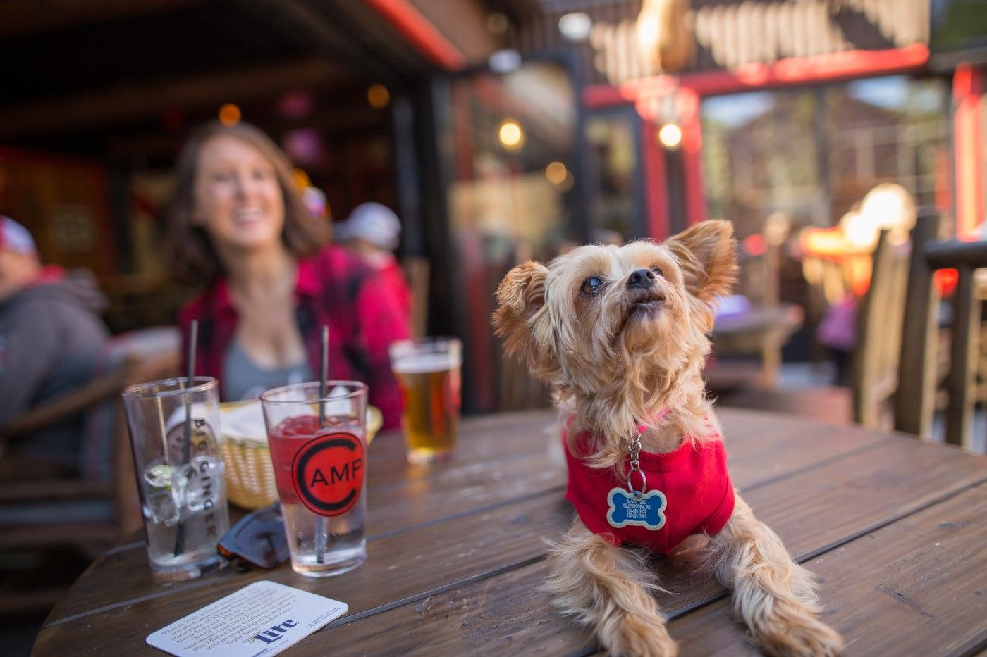 13 Dogfriendly Bars, Restaurants, Patios and Parks in