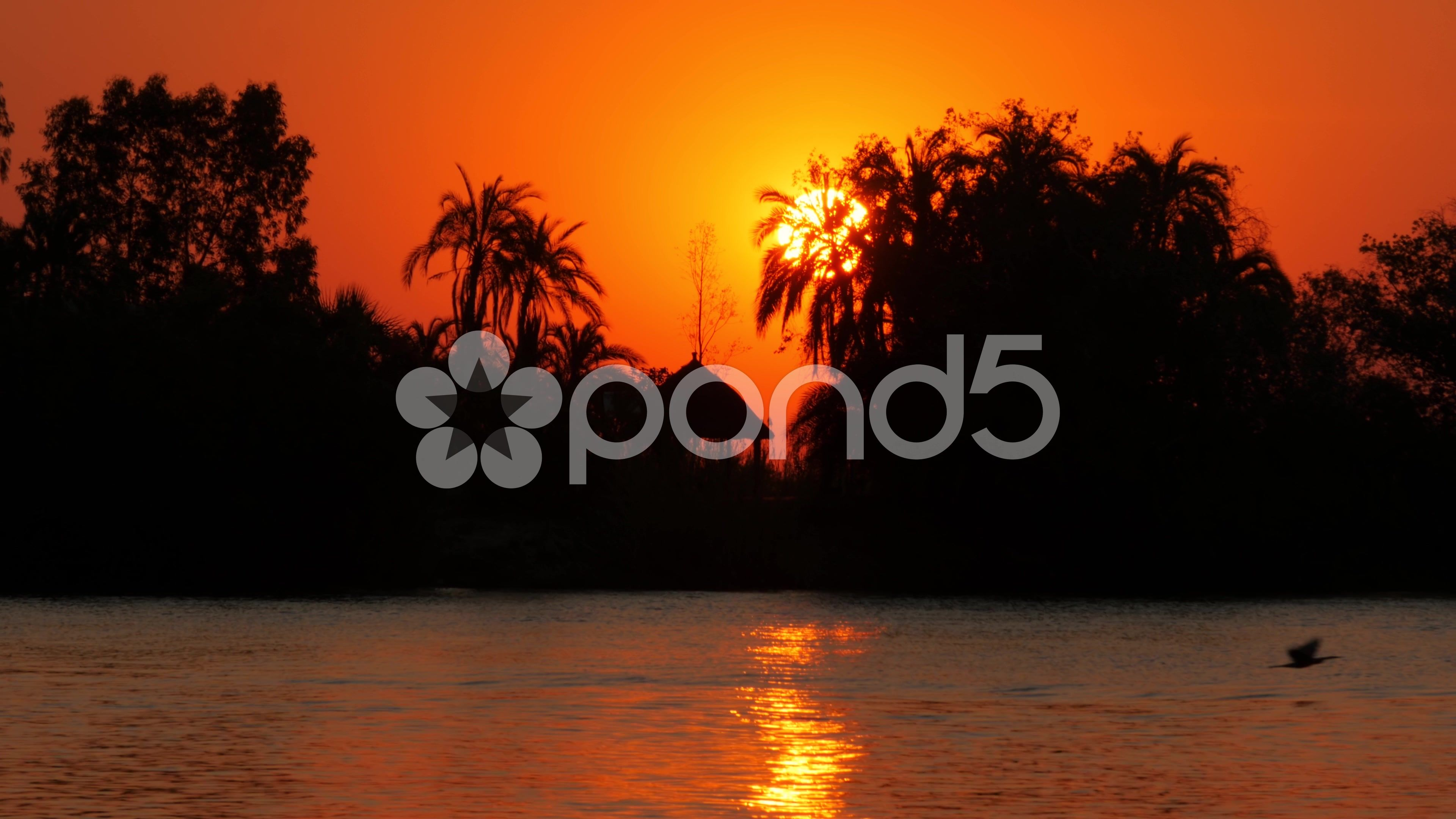 Big sun going down behind river shore uhd 4k stock footage