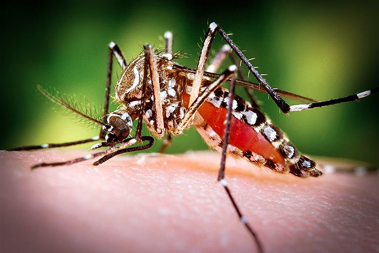 Warming temperatures and extreme weather are making more of the world breeding grounds for the mosquitos that carry the disease.