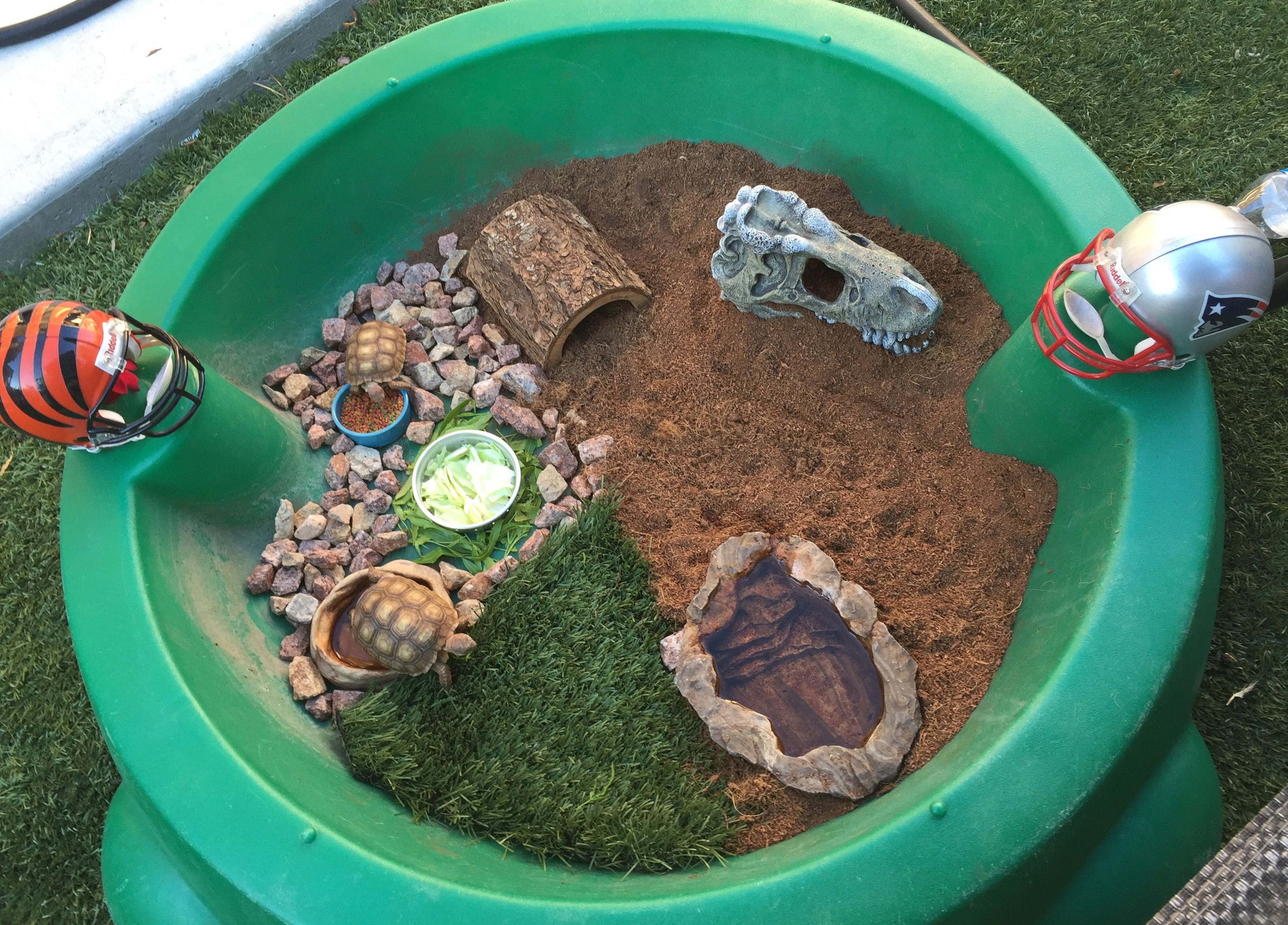 Pin by Lynn Whitelaw on Reptiles and critters   Tortoise ...