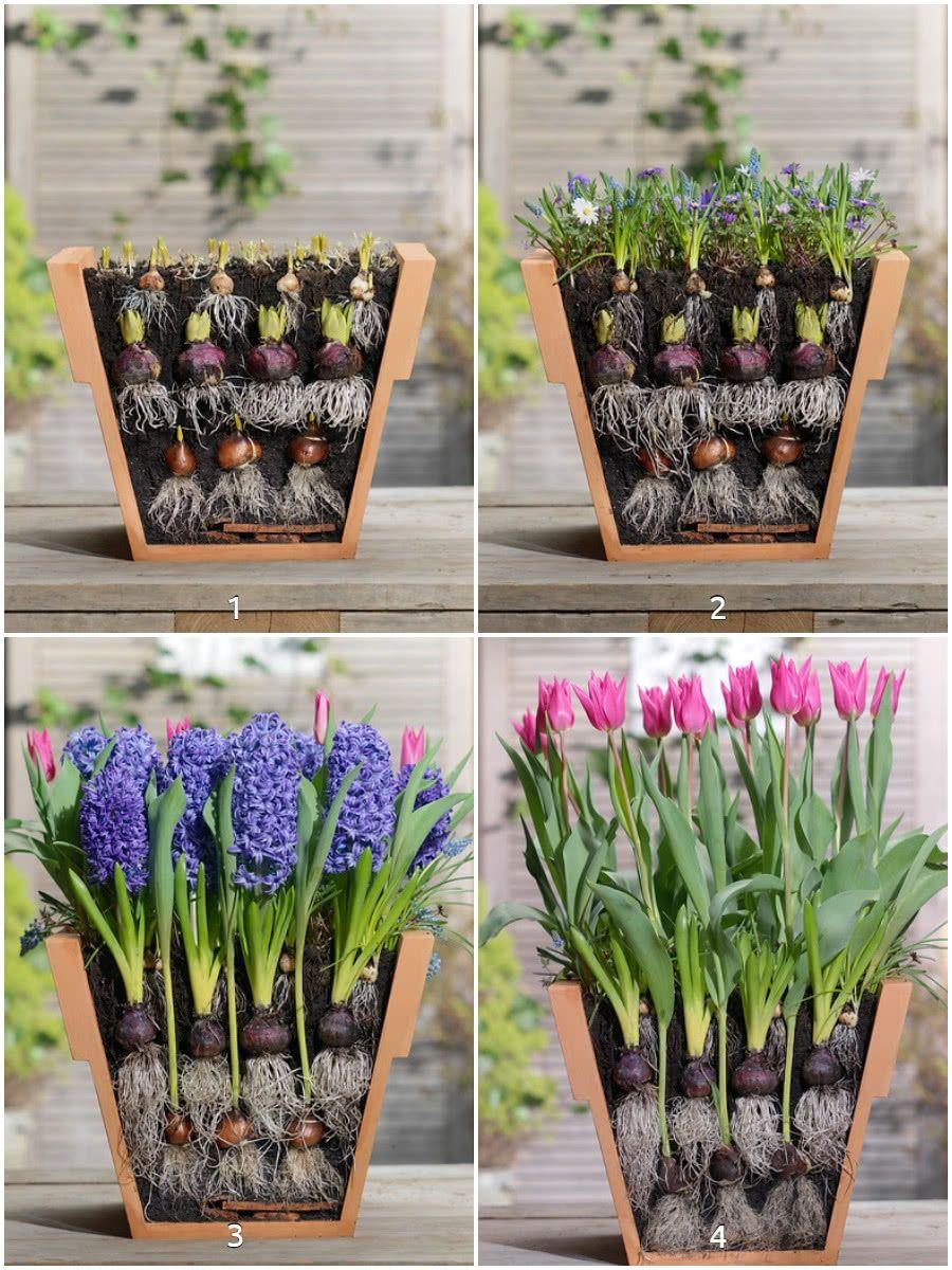 Sadzenie Cebulek Kwiatowych Do Doniczek Kolaz Home Vegetable Garden Flower Planters Bulb Flowers
