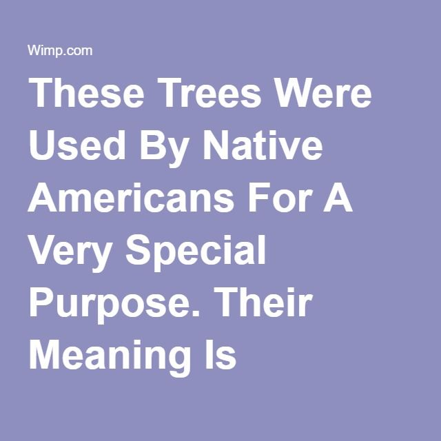 These Trees Were Used By Native Americans For A Very Special Purpose. Their Meaning Is Incredible | facebook