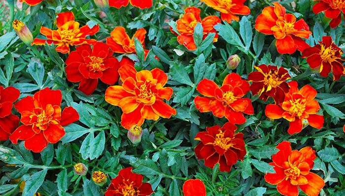 Charmant Southern California Gardening: Some Favorite Spring Flowers
