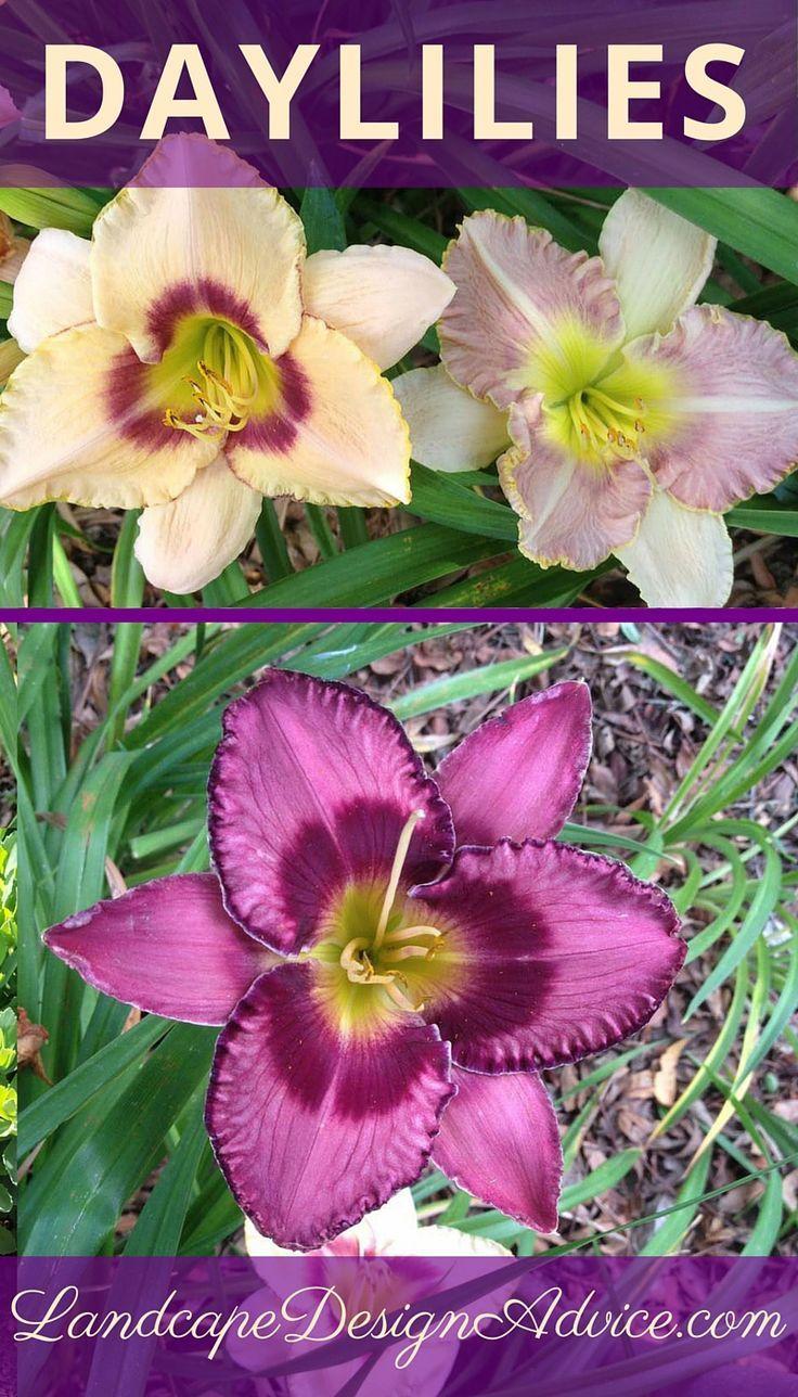 Perennial Flowers For A Stunning Design Garden Landscape Design