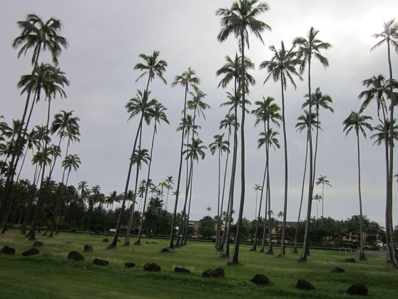 KAUAI, HAWAII: The Coco Palms on Kauai - Where Elvis filmed Blue Hawaii. Magical.
