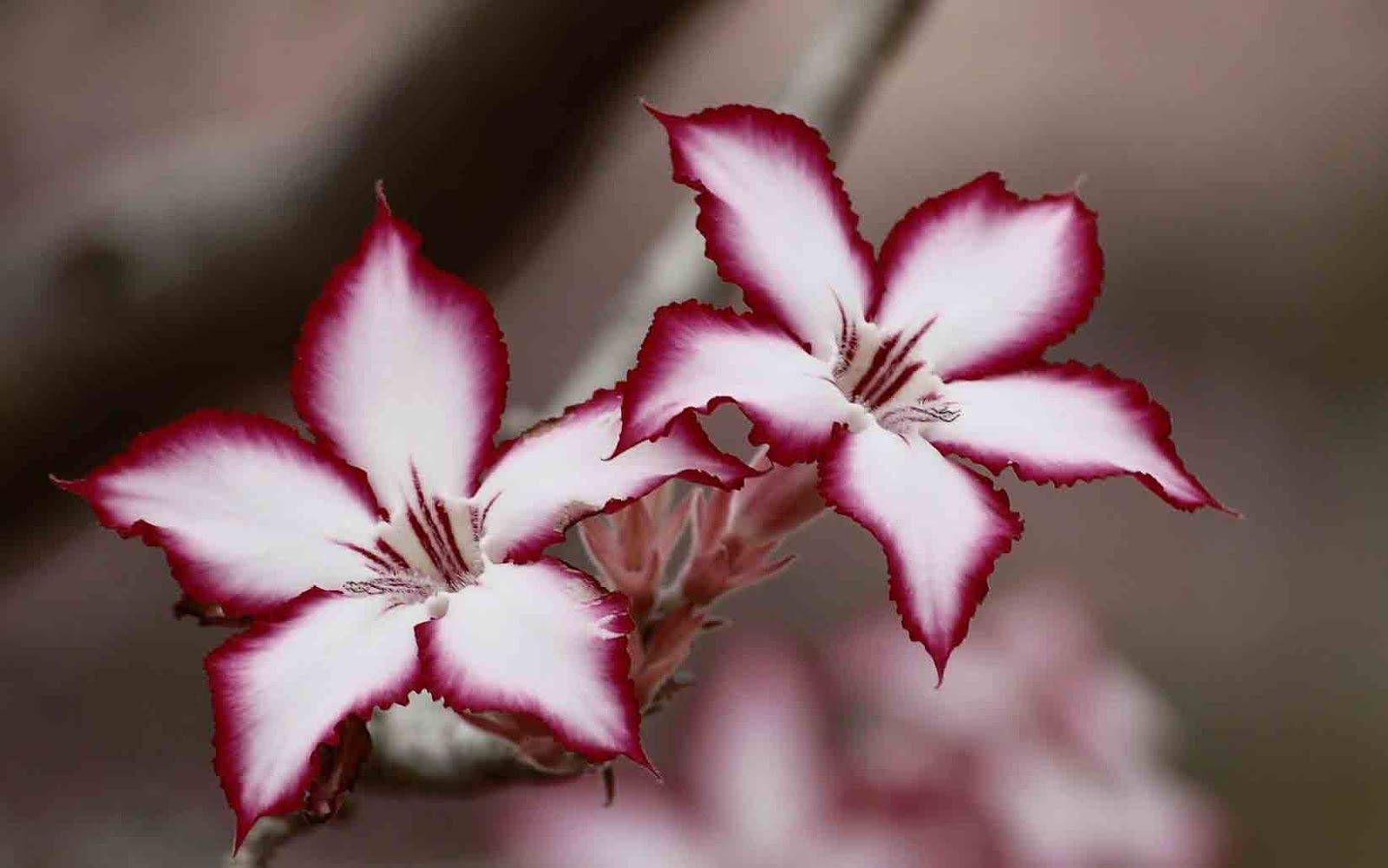 (HD) Beautiful Flower Images For Whatsapp Profile DP