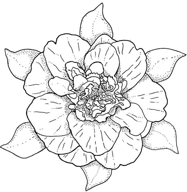 rosa | Mandalas, Dibujo y Colorear