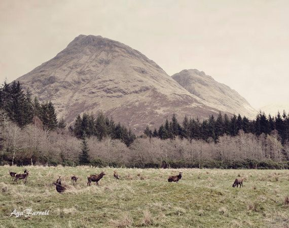 Scotland Photography Landscape Art Deer and by AgaFarrell on Etsy