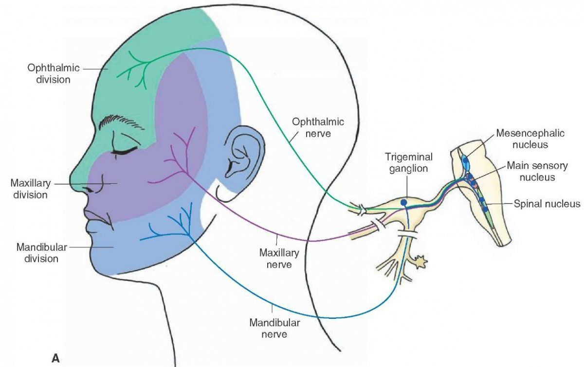What is trigeminal neuralgia what causes trigeminal neuralgia what is trigeminal neuralgia what causes trigeminal neuralgia never ignore these about health ccuart Image collections