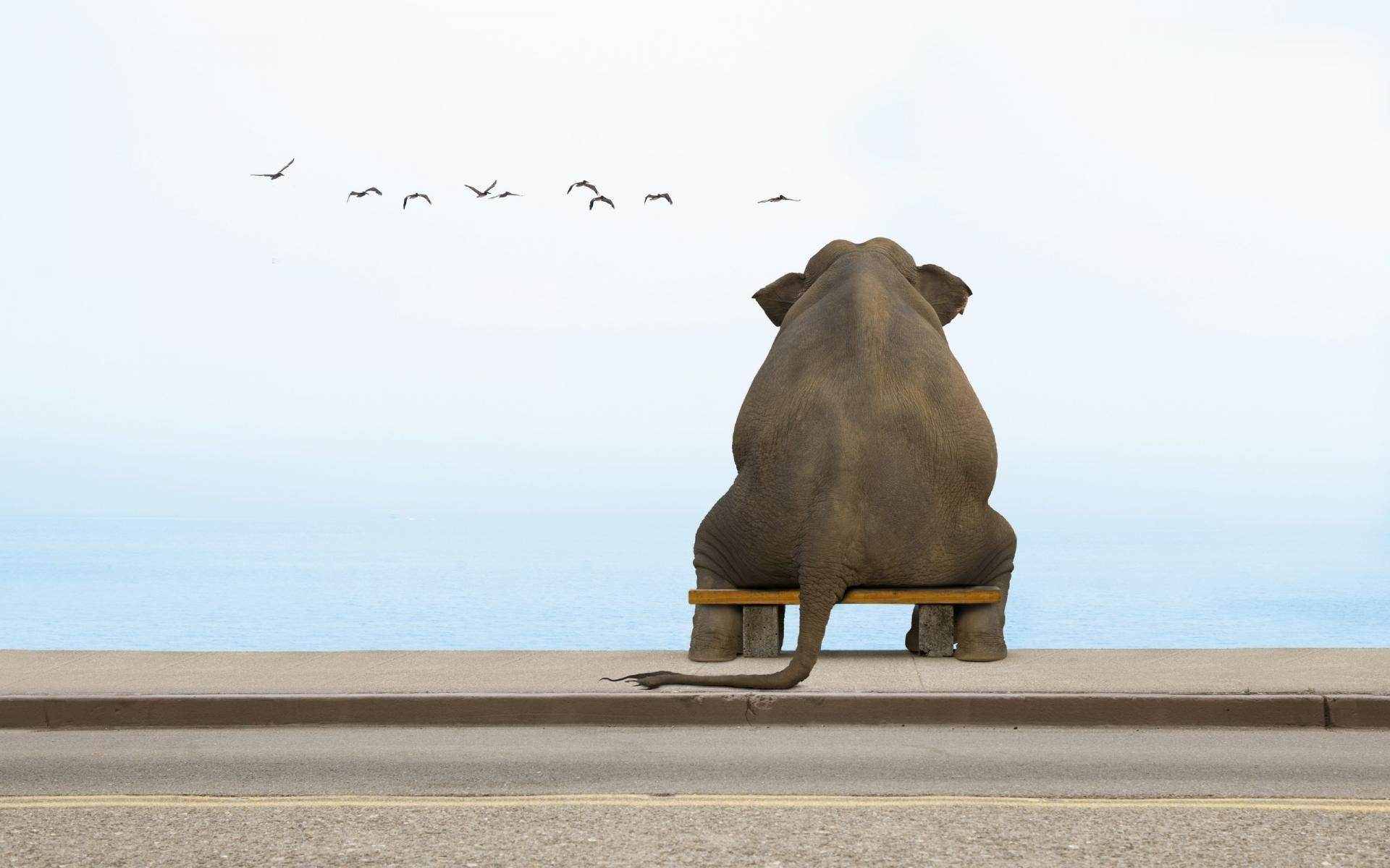 Funny Elephant Wallpapers,Backgrounds,Pictures,Photos