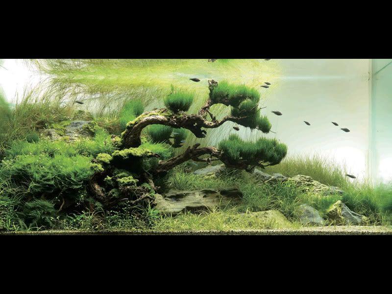 Japanese Garden Inspired Aquarium By Takashi Amano Aquarium Landscape Aquarium Fish Tank Aquascape