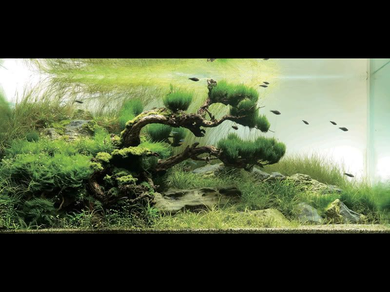 Japanese garden inspired aquarium by takashi amano for Garden with fish tank