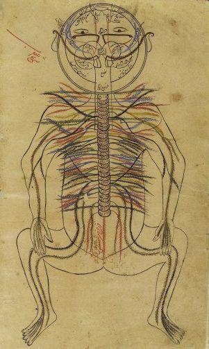 L0013312 Nervous system, Avicenna, Canon of Medicine