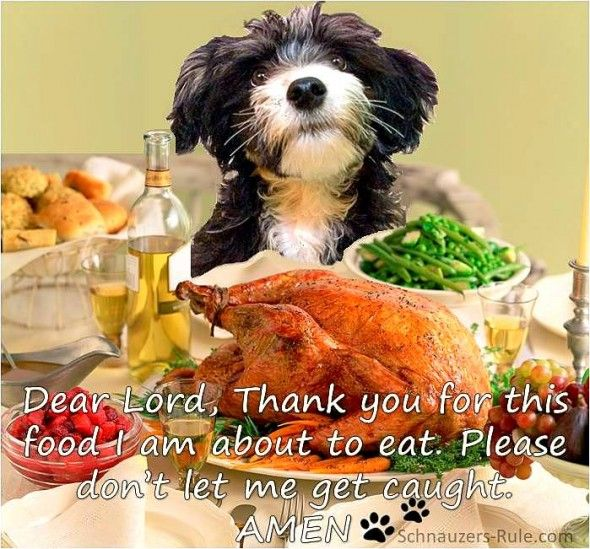 11 27 14 Thanksgiving Dogs13 Dog Thanksgiving Pictures Dog Thanksgiving Animal Lover Quotes