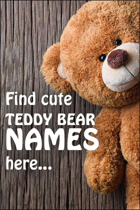 Teddy Bear Names Cute teddy bear names, Teddy bear names