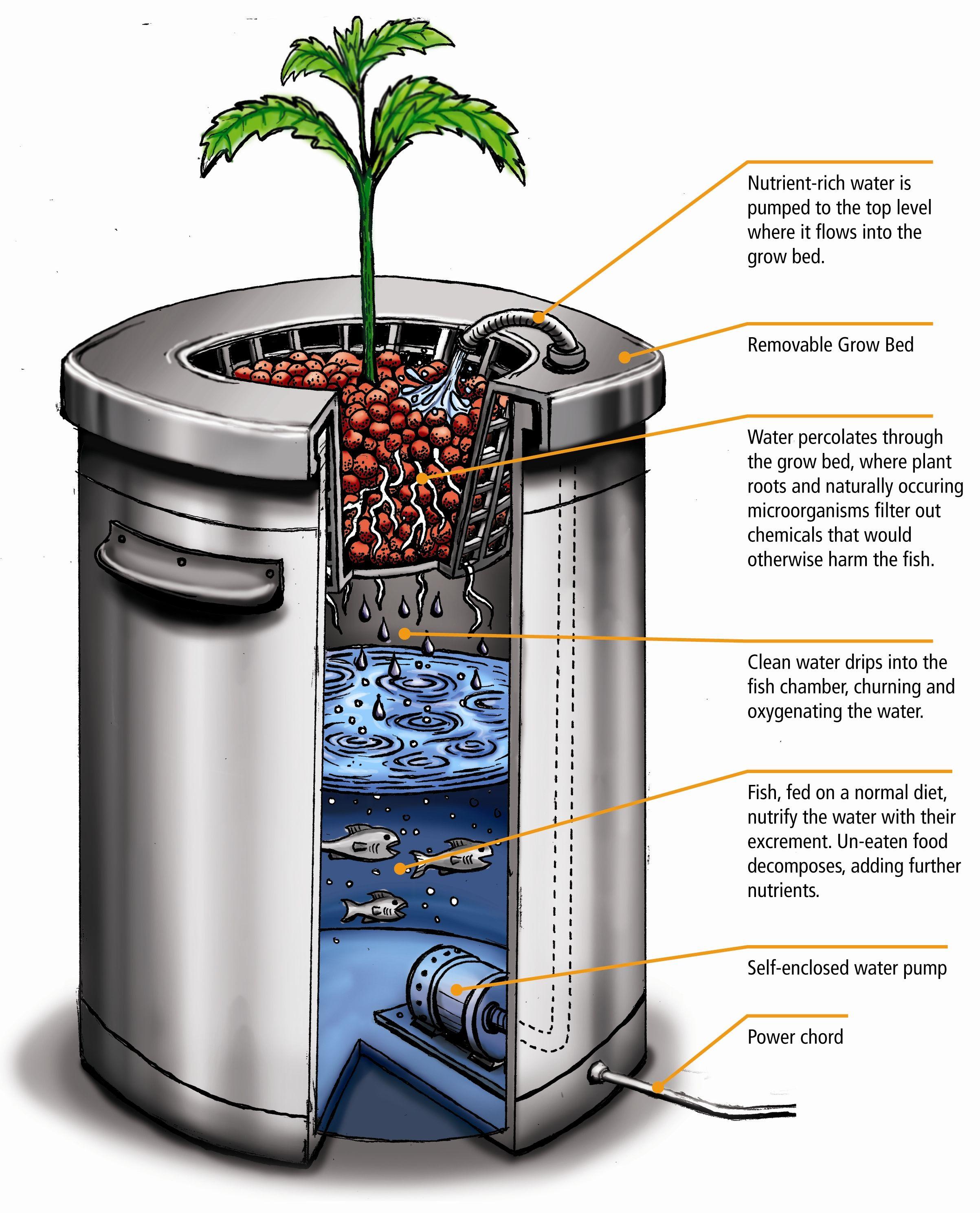 Diy aquaponics hydroponics hydroponics gardens and for Hydroponic fish tank diy