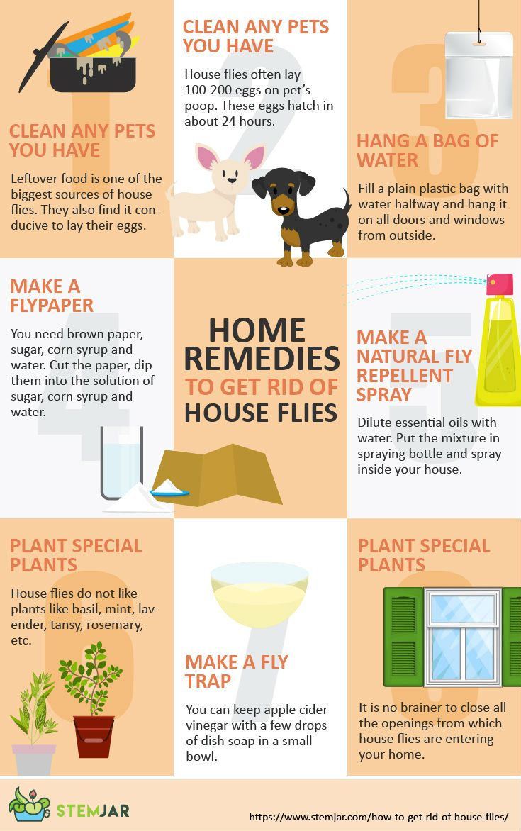 How to Get Rid of House Flies? - Natural Methods   Pest ...