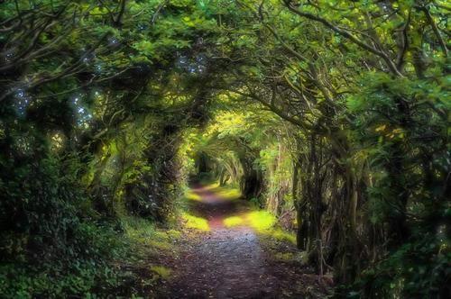 The Grove, Musselburgh, Scotland