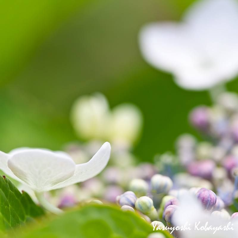 A journey is best measured in friends, rather than miles ~ Tim Cahill  Photo@8270chihaya