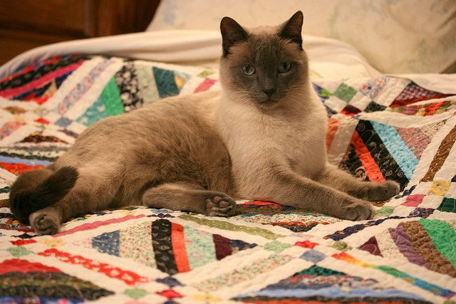 What a beautiful face/kitty!  Love the string quilt too.