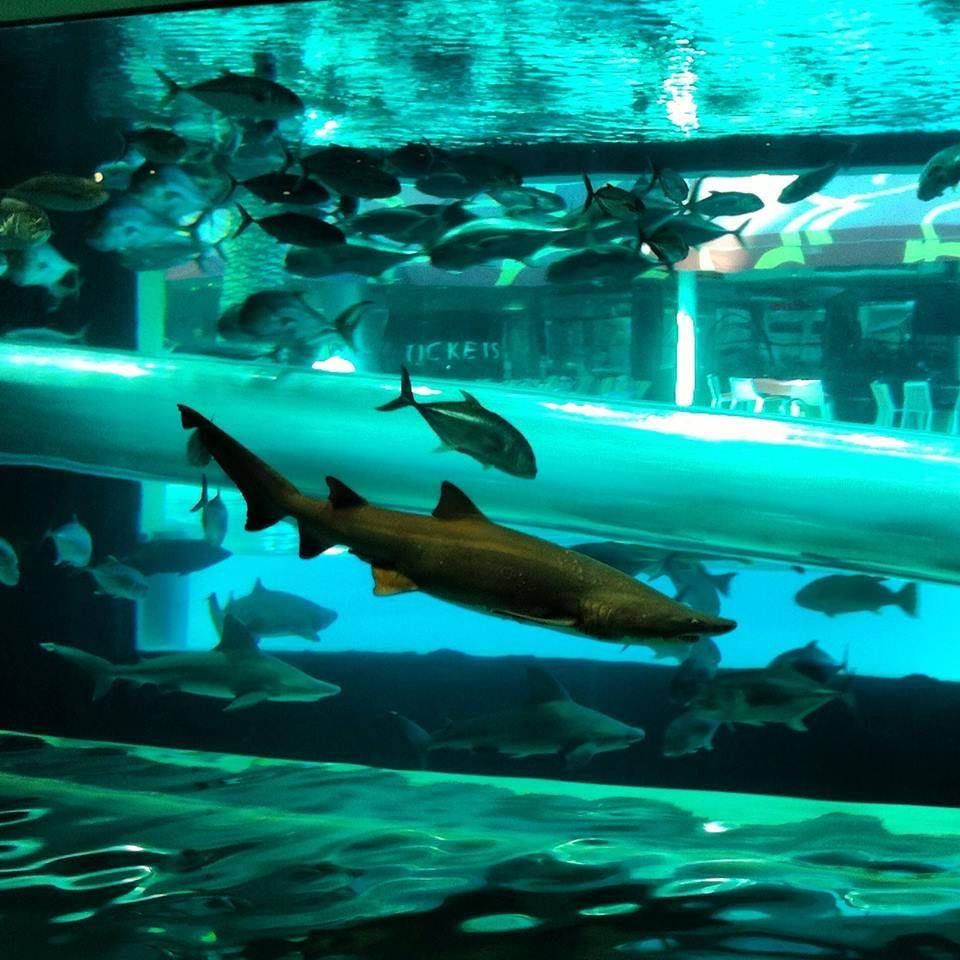 Slide 200 000 Gallon Shark Tank Golden