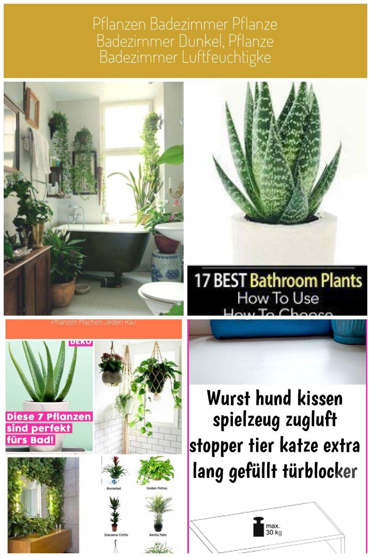Badezimmer Dunkel Luftfeuchtigke Pflanze Pflanzen Pflanzen Badezimmer Pflanze Badezimmer Dunkel Pflanze Badezimmer Luftfeuchtigke Pflanzen Badez In 2020