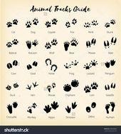 Photo of Animal Tracks Foot Print Guide Ilustración de stock588868880 Animal tracks – foo …