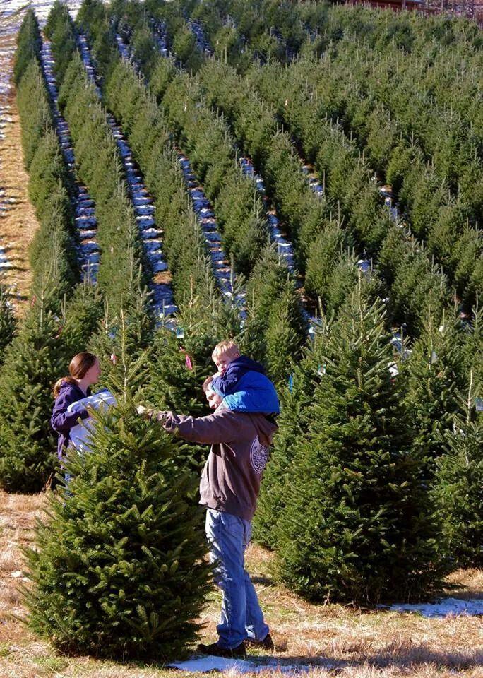 Nc Christmas Tree Farm North Carolina Homes Living In North Carolina Christmas Tree Farm