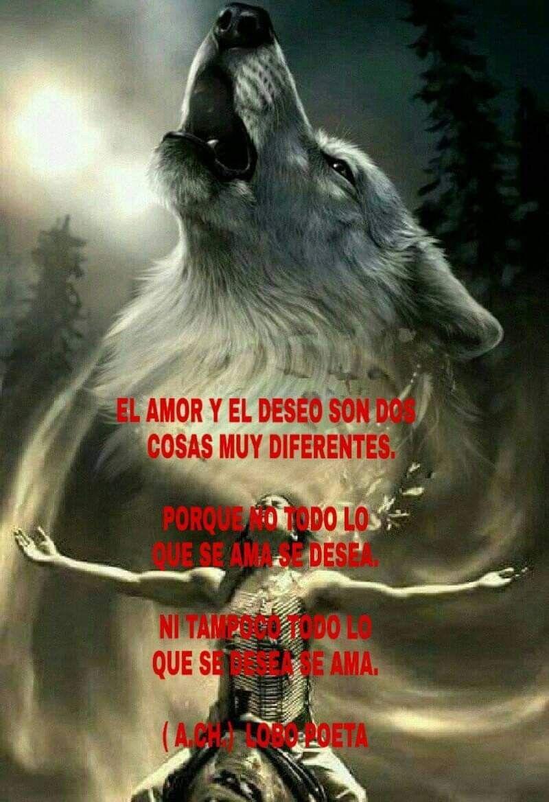 Tristes Frases Desmotivacion Imagenes De Lobos Www Miifotos Com