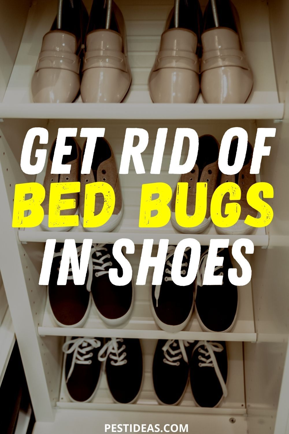 Get Rid of Bed Bugs in Shoes in 2020 Bed bugs, Bed bugs