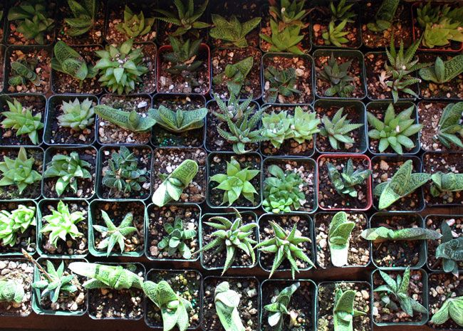 Top Ten Low Light Terrarium Plants Lovely Houseplants Terrarium